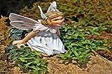 Amazon / Hirt's Gardens: Miniature Abundance English Ivy - 2.5 Pot - Terrarium/Fairy Garden/House Plant