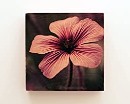 Purple Flower: Photo Mixed Media Art on Wood 6x6