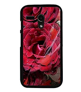 Fuson Premium 2D Back Case Cover Red Roses With yellow Background Degined For Motorola Moto G X1032::Motorola Moto G (1st Gen)