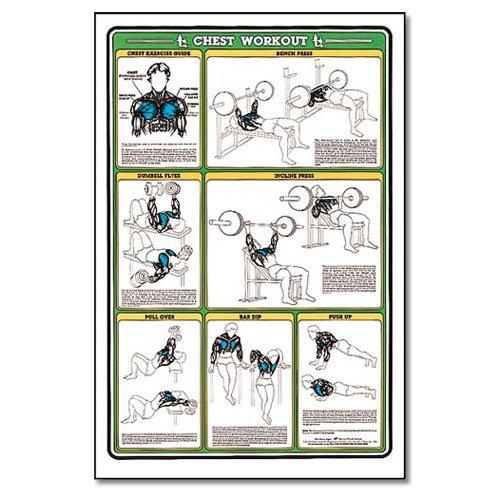 Amazon.com : Algra Fitnus Chart Series Chest Workout : Fitness Charts