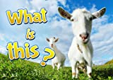 Children Books : What is it ? (Great , Funny Book for Children)  (Age 4 - 9)