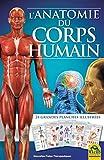 L'anatomie du corps humain...