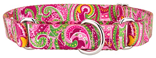 Country Brook Design Martingale Dog Collar, Paisley Collection