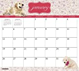Golden Retriever 2014 Magnetic Calendar