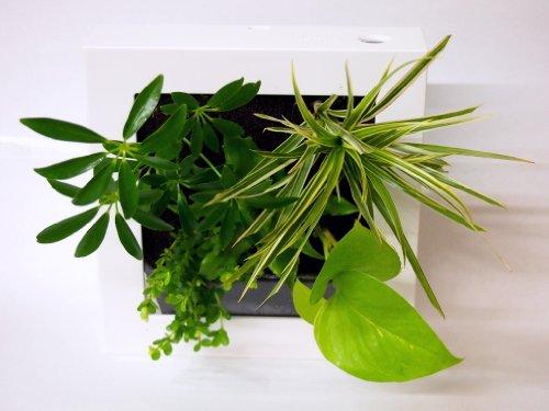 ミドリエ FRAME フレーム 観葉植物ミニ インテリアグリーン ホワイト