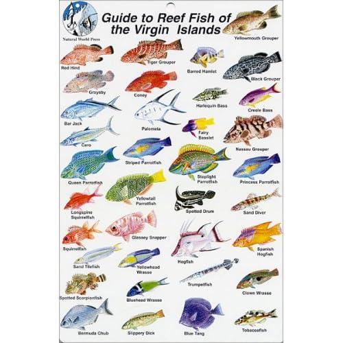 Fish identification cards reef fish for Virgin islands fishing