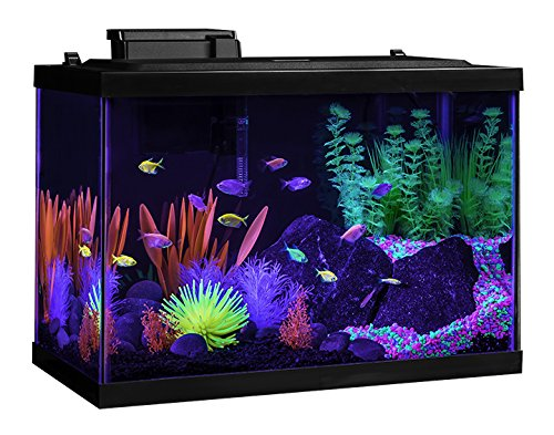 Tetra aquarium kit 20 gallon glo fish frustration free for 20 gallon fish tank kit