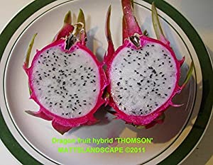 list of healthy fruits cactus fruit