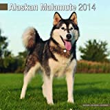 Avonside Publishing Alaskan Malamute 2014 (Calendar 2014)