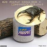 (昆虫)国産オオクワガタ幼虫(3匹) + 菌糸瓶 大夢B プロスペック 800cc 3本 説明書付 本州・四国限定[生体]