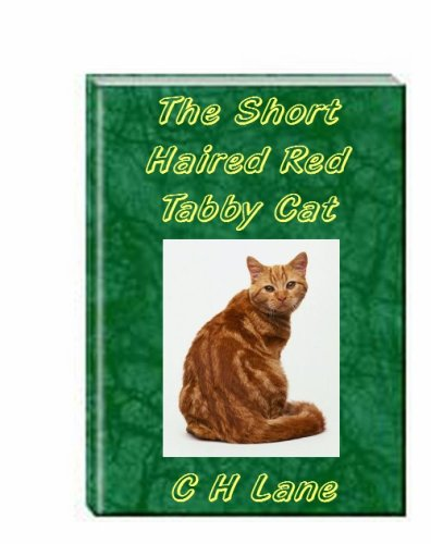 The Short Haired Red Or Orange Tabby Cat