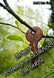 Sieben verborgene Schlüssel zur Gunst (German Edition)