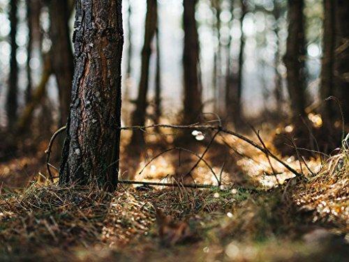 Lais Puzzle Baum in Wald 2000 Teile