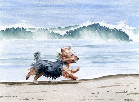 yorkshire-terrier-at-the-beach-dog-art-print-signed-by-artist-dj-rogers