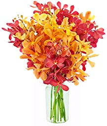 Kabloom Phoenix Rising Red and Yellow Mokara Orchids (10 Stems) - With Vase