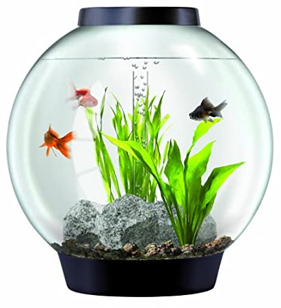 Baby biOrb Aquarium with LED Light (4, 8 or 16 gallons) CHECK PRICE