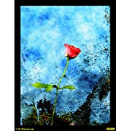 "PixTopper Rose Red 01 Paper Poster(Large 44""x44"")"