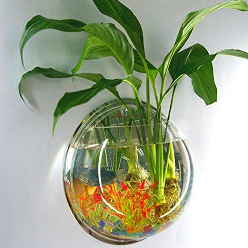 Tinksky da acquario da parete in vetro trasparente vaso for Piante per acquario online