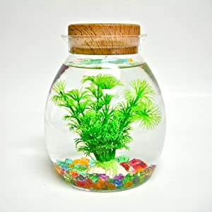 Small Portable Aquarium Aquamate