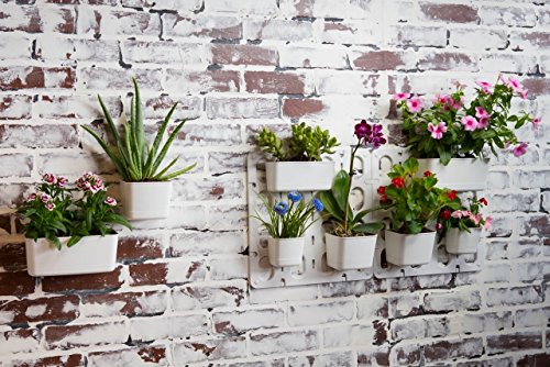 Vertibloom Living Wall Garden Starter Kit   Modular Indoor Vertical Planter  System