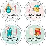 Pinkie Penguin Baby Monthly Stickers - Owls - Milestone Onesie Stickers - 1-12 Months
