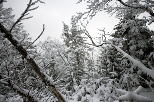 Peaceful Winter Scene in the Adirondacks by Brendan Reals