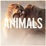 Maroon 5 Animals
