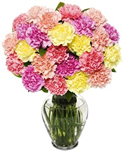 25 Stem Pastel Carnation Bunch - With Vase