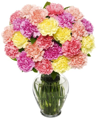 25 Stem Pastel Carnation Bunch | With Vase