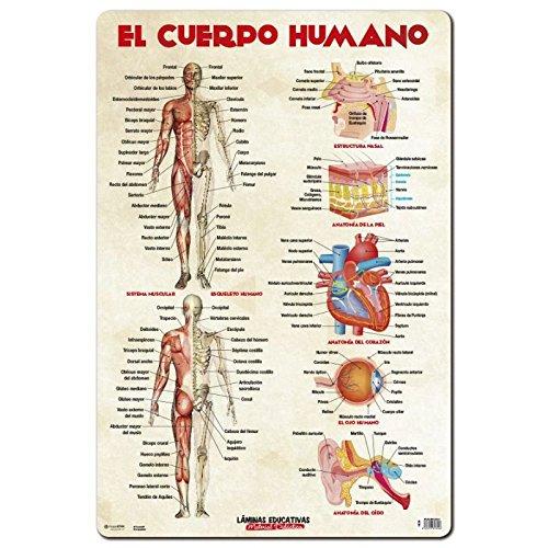 grupo-erik-editores-sl-lamina-educativa-el-cuerpo-humano-grupo-erik