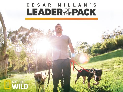 Cesar Millan's Leader of the Pack Season 1