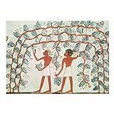 Uvas de la cosecha Artistica di Stampa (60,96 x 45,72 cm)