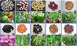 Seedstores : Hybrid Vegetable Seed Kit-1 for Kitchen Terrace Poly House Gardening 10 Items
