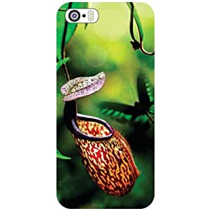 Apple iPhone 5S Back Cover - Nature Designer Cases