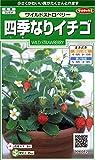 サカタのタネ 実咲花6082 四季なりイチゴワイルドストロベリー 00906082