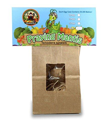 praying-mantis-egg-case-with-hatching-habitat-bag-2-praying-mantids-egg-cases