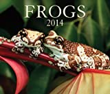 img - for Frogs 2014 book / textbook / text book