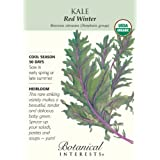 Red Winter Kale Certified Organic Heirloom Seeds 250 Seeds