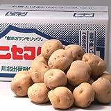 【予約販売商品】北海道ニセコ産男爵いも10kg【じゃがいも ポテト 人気】
