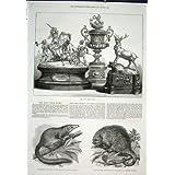 Impresión 1875 de Londres del Parque Zoológico del Puerco Espín de la Musaraña de Árbol de la Placa del Fular