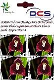 (030) Color-3 Potted Peru Monkey Face Orchid Seeds ,Senior Phalaenopsis Bonsai Plants Flower Seeds -10 pcs