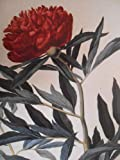 The Flowering of Florence: Botanical Art for the Medici (0894682881) by Tongiorgi Tomasi, Lucia