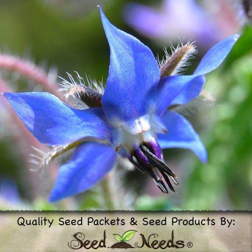 100 Herb Seeds, Borage Herb (Borago Officinalis) Packaged By Seed Needs