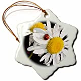 3dRose orn_22685_1 Daisies with a Ladybug Porcelain Snowflake Ornament, 3-Inch