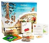 Saatgut Garten Adventskalender - 24 Schachteln mit verschiedenen Samen + 5 Tees