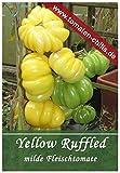 Tomaten Samen - 10 Stück -Yellow Ruffled - Fleischtomate