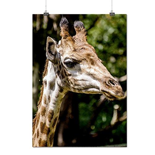 Grand Girafe Visage africain Matte/Glacé Affiche A0 (119cm x 84cm) | Wellcoda