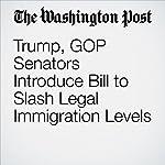 Trump, GOP Senators Introduce Bill to Slash Legal Immigration Levels   David Nakamura
