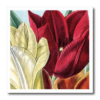 PS Vintage - Vintage Tulip Flowers - 6x6 Iron on Heat Transfer for White Material (ht_203816_2)