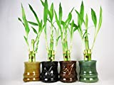Live 3 Style Party Set of 4 Bamboo Plant Arrangement w/ Ceramic Vase